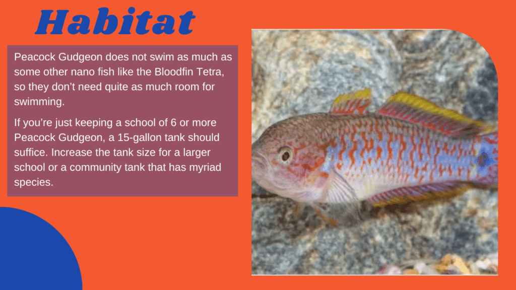 What type of habitat does Peacock Gudgeon live in