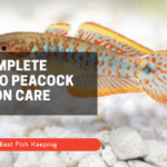 The Complete Guide to Peacock Gudgeon Care 2021