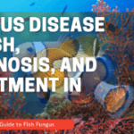 Fungus Disease In Fish, Diagnosis, And Treatment