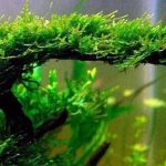 Floating Aquarium Plants | Everything You Need to Know About