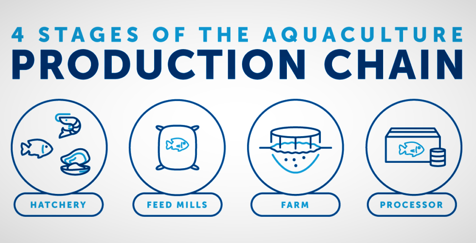 How Does Aquaculture Work