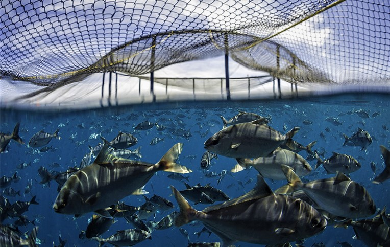 Open-net Cage Systems