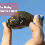 What Do Baby Snapping Turtles Eat