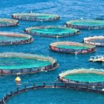 Secrets About Types Of Aquaculture That Has Never Been Revealed
