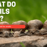 What do snails eat ? A list of food for snails
