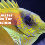 Freshwater Sharks For Aquarium | A Hobby For Everyone
