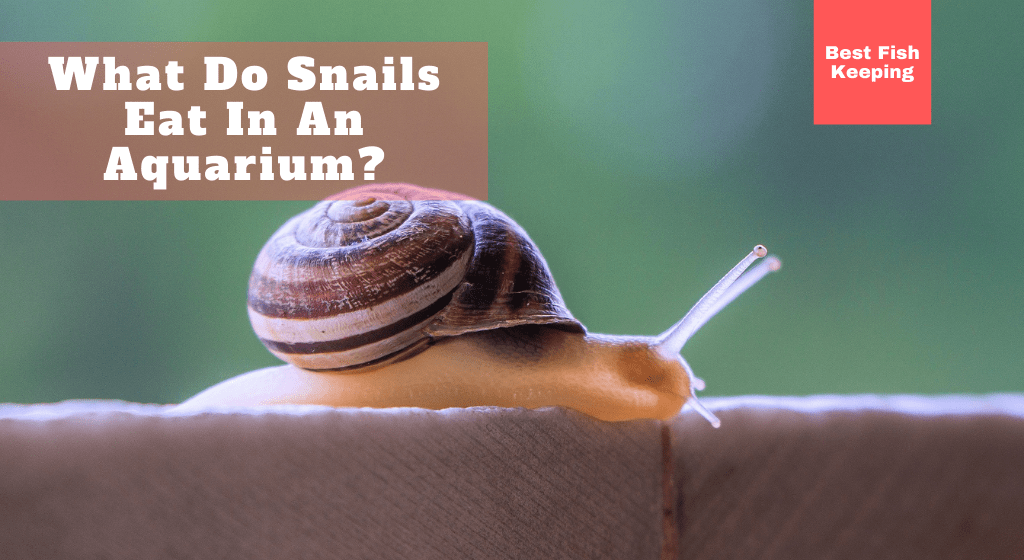 what-do-snails-eat