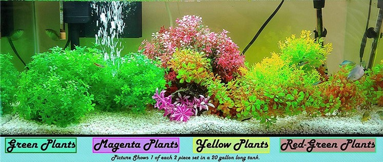 plants to decorate fish tank