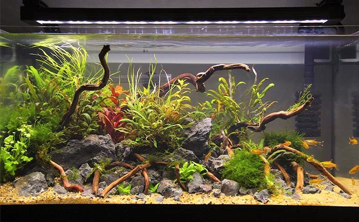 The Nitrogen Cycle of a Tank In 24 Hours