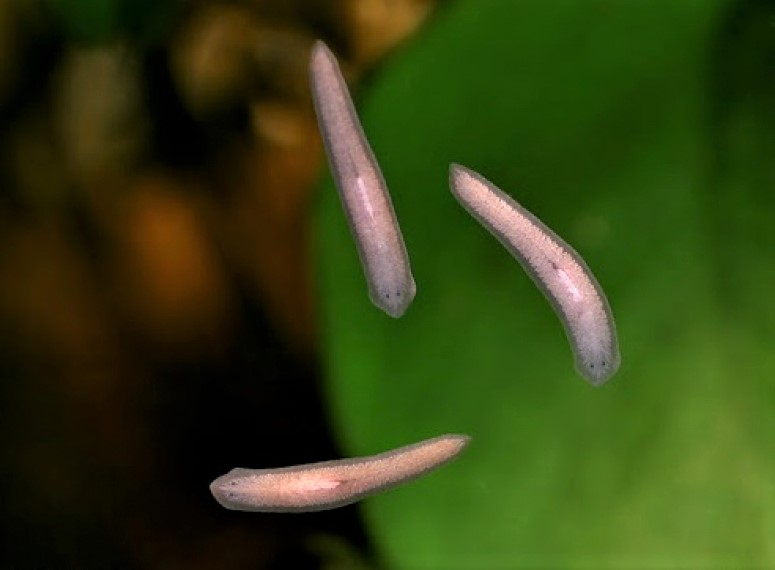 Types Of Aquarium Worms