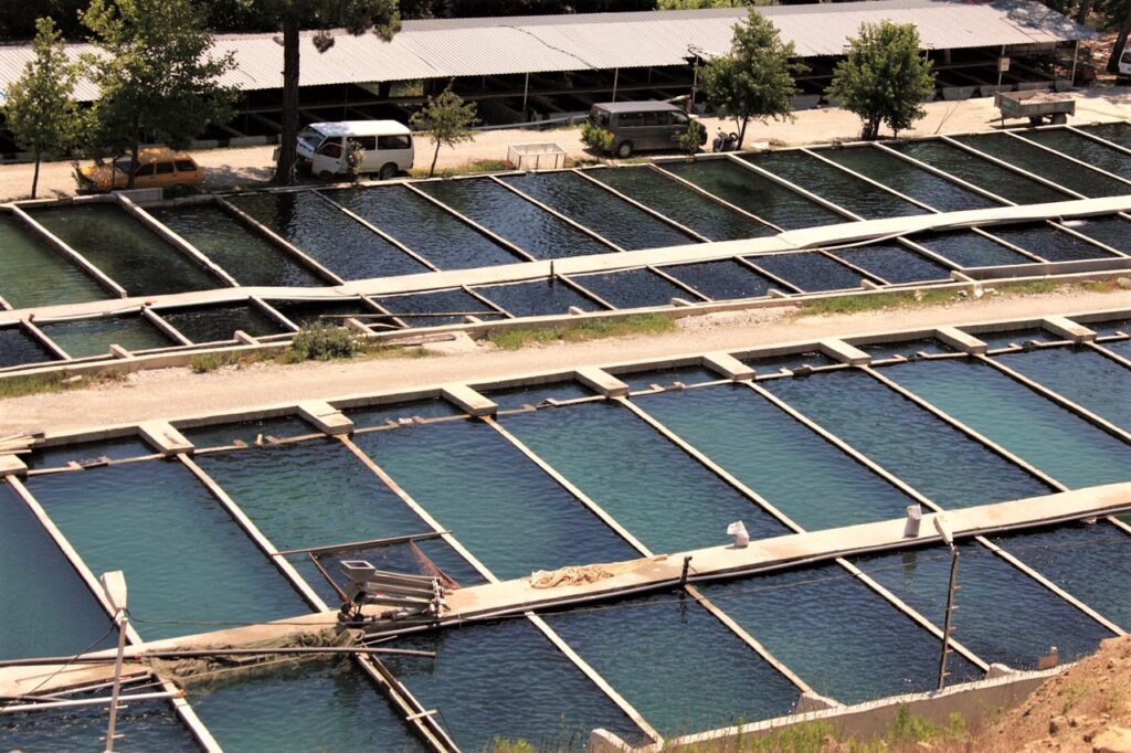 Benefits of Invest In Aquaculture