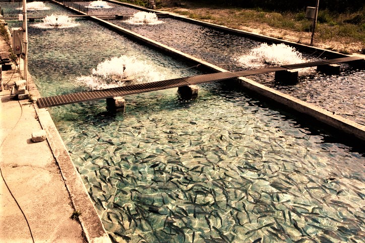 Economic Benefits Of Invest In Aquaculture