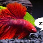 How Do Fish Sleep In A Tank? | What Does A Sleeping Fish Look Like?