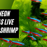 Can Neon Tetras Live With Shrimp