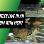 Can Turtles Live In An Aquarium With Fish? Why or Why Not