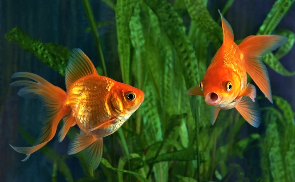 How To Keep Your Fish Tank Clean