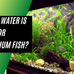Which Water Is Best For Aquarium Fish -  Best Fish Keeping