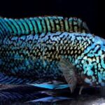 The Ultimate Guide for Electric Blue Jack Dempsey