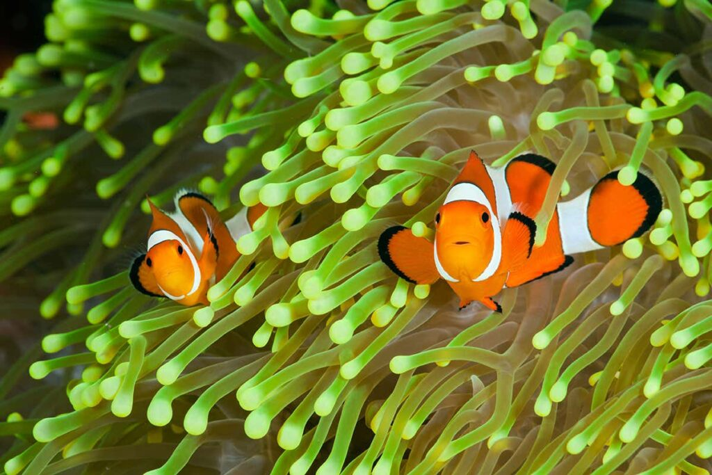 What Do Clownfish Eat in the Ocean