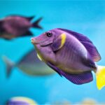 How to Euthanize a Fish with Baking Soda, Clove Oil & Anesthetic