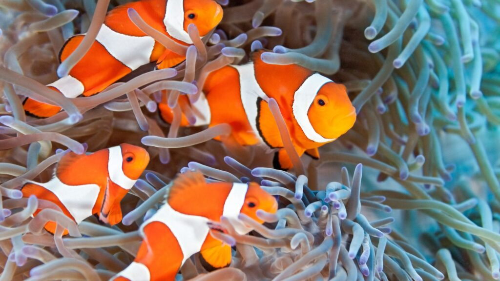 how to take care clownfish