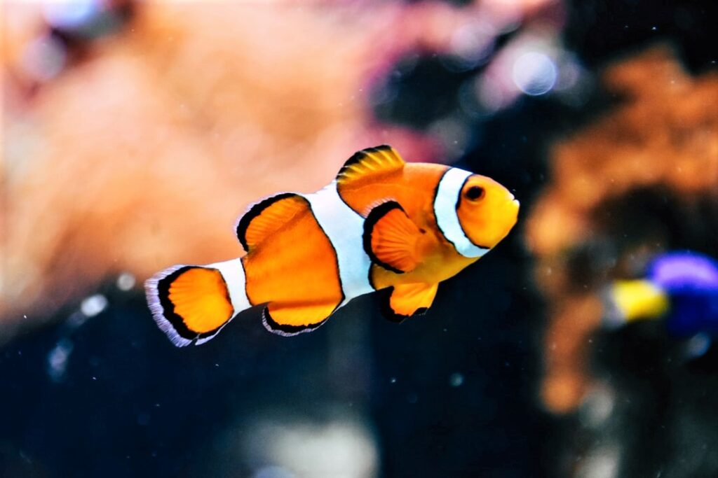 When to Euthanize a Fish?
